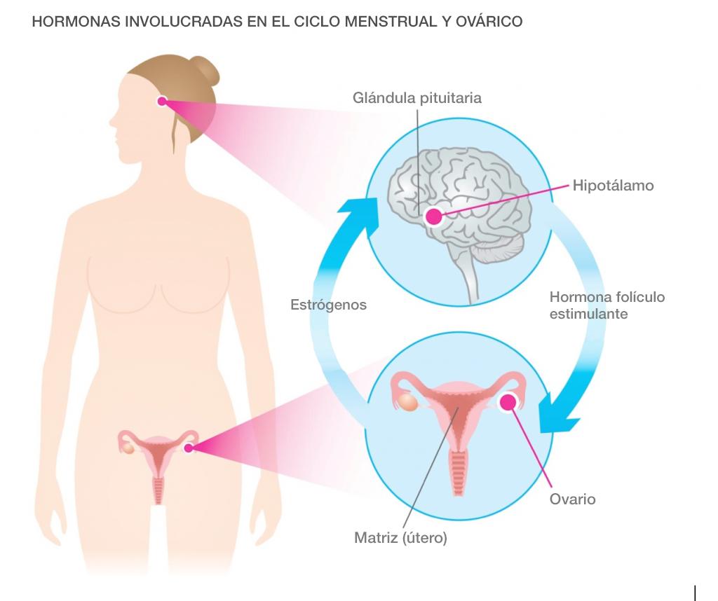 Hormonas y los ciclos de la mujer